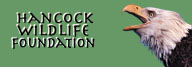 Hancock Wildlife Foundation