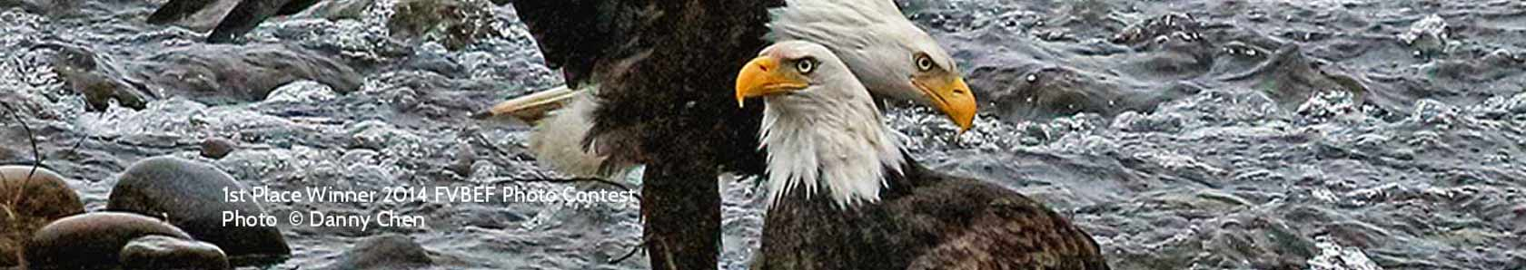 The Fraser Valley Bald Eagle Festival ~ Mission BC