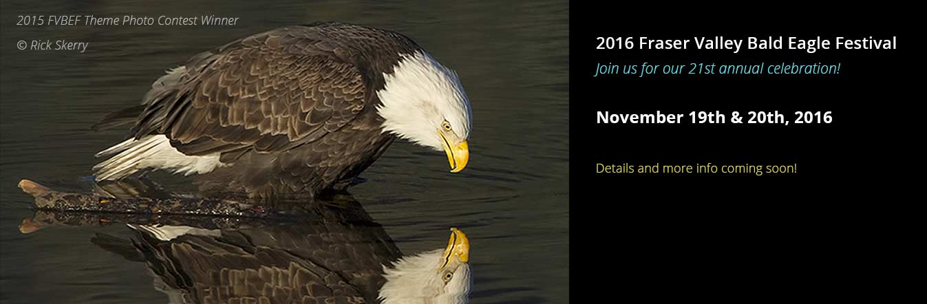 21th Annual Fraser Valley Bald Eagle Festival November 19th & 20th, 2016