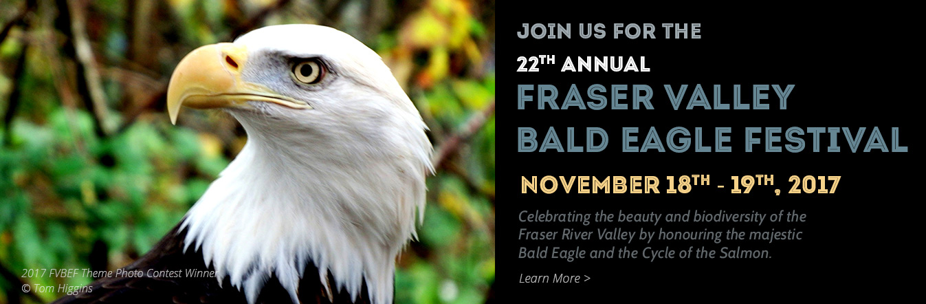 2017 - Fraser Valley Bald Eagle Festival