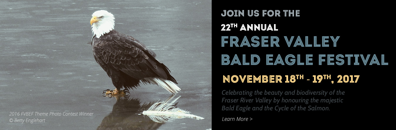 2017 Fraser Valley Bald Eagle Festival - Nov 18-19